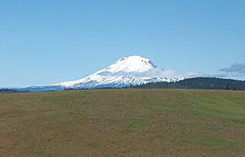 Mount Adams rising up behind our pasture.