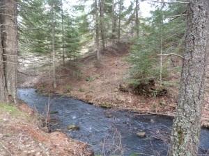 Our noisy little creek.