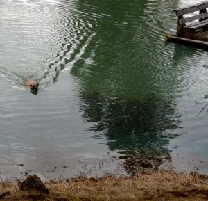 Ella earned her swim.