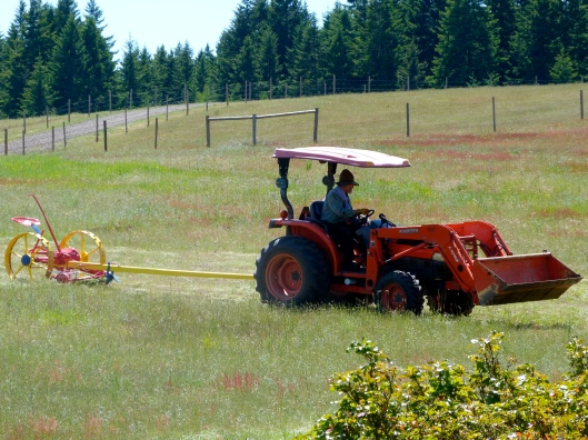 Gary mowing hay, with the horse-drawn mower hooked up to the tractor