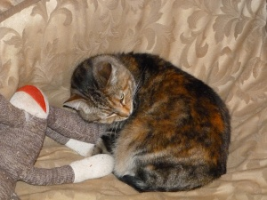 Mira wasn't shy about curling up on Ella's bed with Ella's sock monkey.
