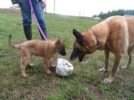 Ella checks out Sundog's potential as a playmate.